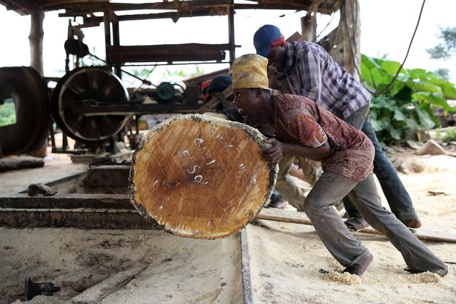 Labourers roll a log into a milling machine at a sawmill near an unreserved forest in Igede-Ekiti township, southwest Nigeria, August 18, 2014. (Photo by Akintunde Akinleye/Reuters)