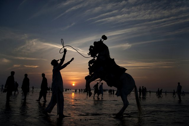 Adnan Khan directs his horse to perform in an attempt to attract people visiting Clifton beach in Karachi, Pakistan, Friday, Nov. 14, 2014. Khan earns his living by providing the horse ride to customers visiting a beach. (Photo by Shakil Adil/AP Photo)