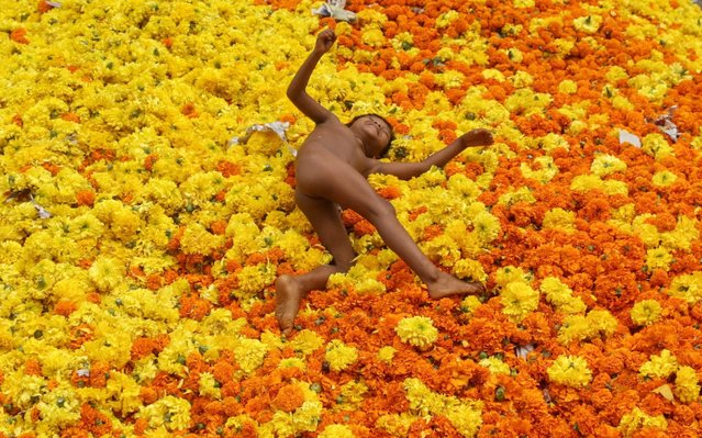 An Indian toddler plays amid marigold flowers at a wasted flowers dumping site, besides a flower market in Mumbai, India, 28 September 2016. Marigold flowers are used in many religious ceremonies in the temples in India. Strung together they make colourful garlands and are used as an offering in temples and to decorate them. (Photo by Divyakant Solanki/EPA)