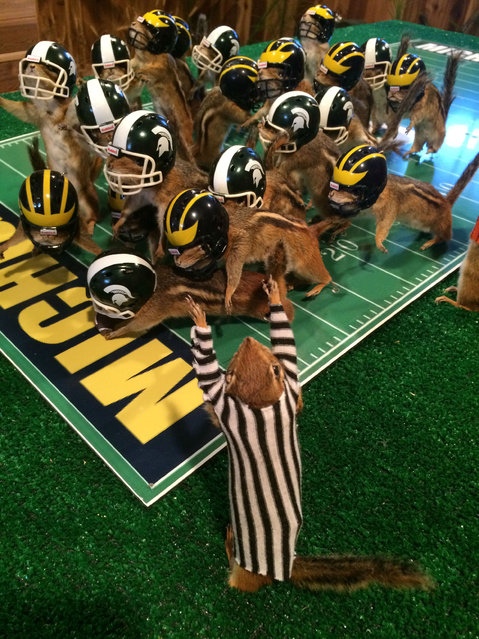 This photo taken Monday, October 26, 2015, shows stuffed chipmunks portraying players on the final play of the Michigan State-Michigan NCAA college football game at the home of taxidermist Nick Saade in Lansing, Mich.  Michigan State's Jalen Watts-Jackson returned a fumble for the game-winning touchdown on Oct. 17. Saade tells the Lansing State Journal that the chipmunks were trapped by friends as nuisance animals. (Photo by Judy Putnam/Lansing State Journal via AP Photo)