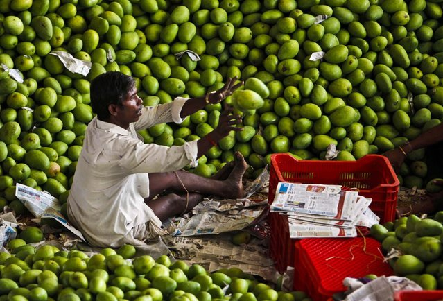 An Indian worker sorts mangoes at a wholesale fruit market in Hyderabad, India, Friday, April 12, 2013. India recognizes the mango as its national fruit and is the world's largest mango producer with about 13 million tons each year, far exceeding all other countries. (Photo by Mahesh Kumar A./AP Photo)