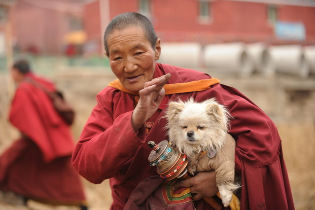 This photo taken on April 4, 2013 shows an elderly Buddhist nun carrying her dog in Seda Monastery, the largest Tibetan Buddhist school in the world, with up to 40,000 monks and nuns in residence for some parts of the year. (Photo by Peter Parks/AFP Photo)