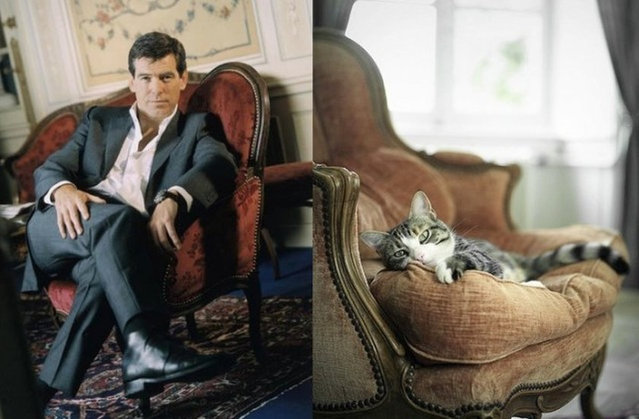 Hot Guys and Cats Striking Part3