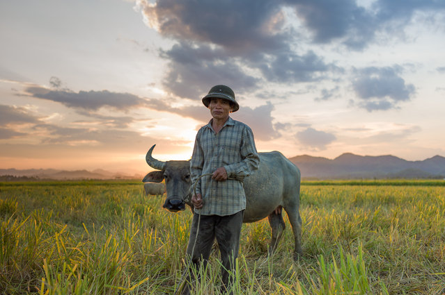 """Sunset near the Ho Chi Minh Trail"". The end of another hot day at the start of this harvest season as a farmer begins his long walk back home with his invaluable water buffalo in tow. Location: Phong Nha, Northern Central Vietnam. (Photo and caption by Jesus Davis/National Geographic Traveler Photo Contest)"
