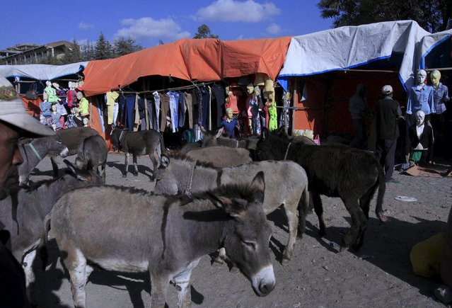 Donkeys stand near used clothes shops at the Mercato market in Addis Ababa December 16, 2015. (Photo by Tiksa Negeri/Reuters)