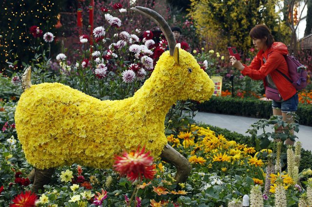 A visitor takes a picture of a floral display of goats made from chrysanthemum blooms ahead of the Lunar New Year at the Gardens by the Bay greenhouse in Singapore February 9, 2015. The Chinese Lunar New Year on February 19 will welcome the Year of the Sheep (also known as the Year of the Goat or Ram). (Photo by Edgar Su/Reuters)
