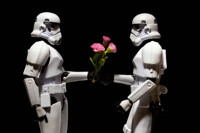 A storm trooper gives another a bunch of flowers, taken in Glasgow, Scotland, December 2016. (Photo by David Gilliver/Barcroft Images)
