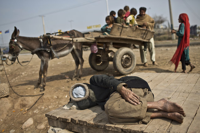Children play on a donkey cart belonging to an elderly Afghan refugee sleeping on a roadside on the outskirts of Islamabad, Pakistan, Wednesday, February 18, 2015. (Photo by Muhammed Muheisen/AP Photo)