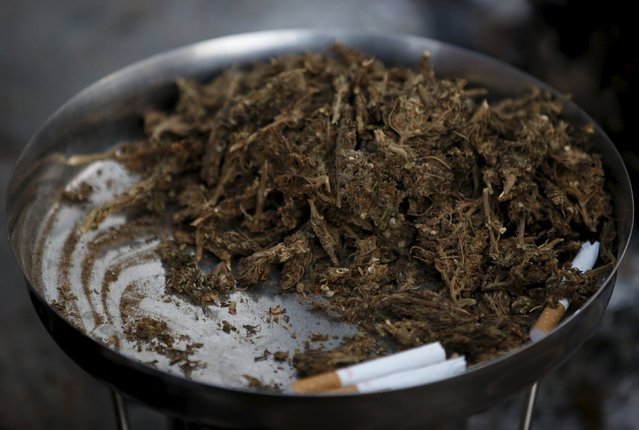 A plate filled with marijuana is kept for sale during the Shivaratri festival at the premises of Pashupatinath Temple in Kathmandu, Nepal, March 7, 2016. (Photo by Navesh Chitrakar/Reuters)