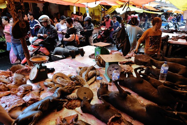 This picture taken on February 18, 2017 shows a vendor offering dog meat to his customers in Tomohon market in northern Sulawesi, Indonesia. (Photo by Bay Ismoyo/AFP Photo)