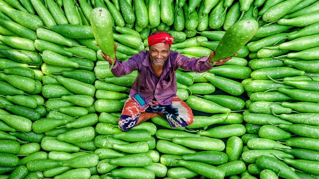 A market trader in Gaibandha in Bangladesh on September 25, 2019, surrounded by bottle gourd vegetables, which sell for around 3p  ($ 0.04) each. (Photo by Solent News)