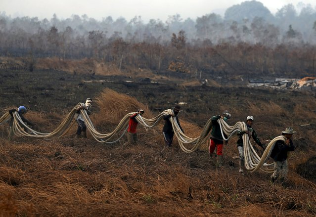 Workers bring water pipes to extinguish fire as they walk through a burnt palm oil plantation at the Pulo Geronggang village in Ogan Komering Ilir district in Indonesia's South Sumatra province, September 11, 2015. (Photo by Reuters/Beawiharta)