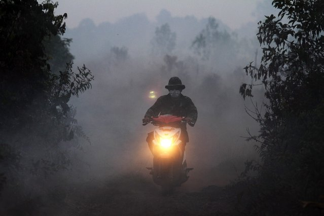 An Indonesian soldier rides a motorbike through thick smoke from burning land in Kampar, Riau province, Indonesia, 27 August 2016. According to media reports, thousands of firefighters have been sent in Riau province to control the land and forest fire. Indonesian authorities reported that they have arrested more than 450 people linked to forest fires that hit the country in previous years caused a cloud of toxic smoke which affected several countries in the region, local media reported 26 August 2016. The head of the National Police, Tito Karnavian, said the arrests serve as a deterrent against companies and farmers who start uncontrolled burning of agricultural production land for cleaning. (Photo by Rony Muharrman/EPA)