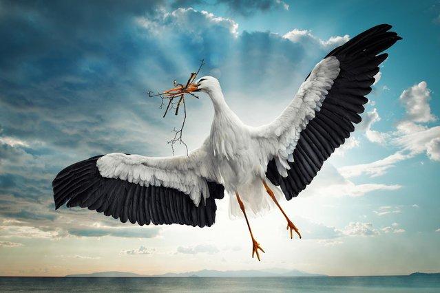 """Busy Stork"". (John Wilhelm)"