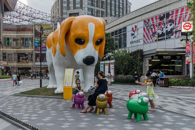 A dog statue makes Shanghai a little cuter, on September 19, 2016. (Photo by Wang Gang/ZUMA Press/Splash News)