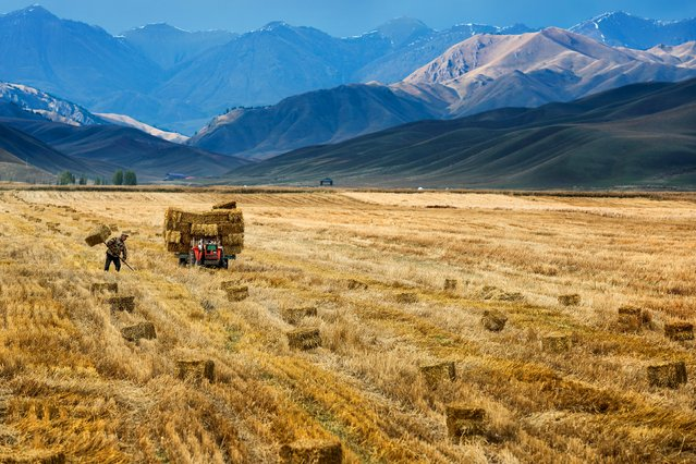 A farmer harvests in a crop field in Yili, Xinjiang Autonomous Region, October 3, 2015. The world's largest makers of tractors and combines are finding a rare opportunity for growth in China despite a sharp slowdown in the world's No. 2 economy, with big farm machines in demand as the rural labor force shrinks and plot sizes grow. (Photo by Reuters/China Daily)