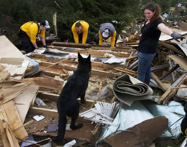 Rescuers search for lost animals after tornadoes hit Shawnee, Oklahoma on Monday. (Photo by Marcus DiPaola/Xinhua via Zuma Press/MCT)