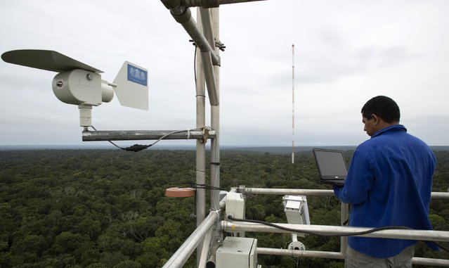 A worker monitors the Amazon Tall Tower Observatory (ATTO) in Sao Sebastiao do Uatuma in the middle of the Amazon forest in Amazonas state January 9, 2015. (Photo by Bruno Kelly/Reuters)