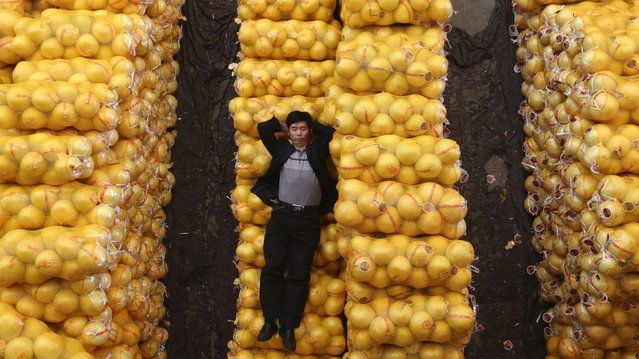 A vendor sleeps on packs of grapefruit at a market in Wuhan, Hubei province, October 15, 2012. (Photo by Reuters)