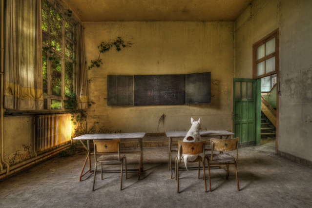 Claire studying in an abandoned school in Belgium. (Photo by Alice van Kempen/Caters News)