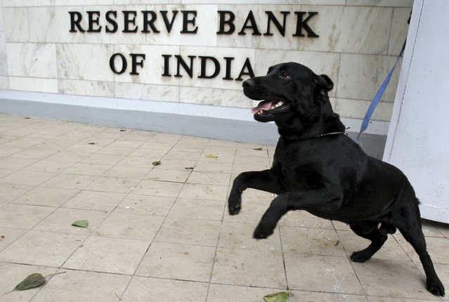 A sniffer dog from the Indian police is tied outside the Reserve Bank of India (RBI) head office in Mumbai in this April 17, 2012 file photo. The RBI is expected to make a rate decision this week. (Photo by Vivek Prakash/Reuters)