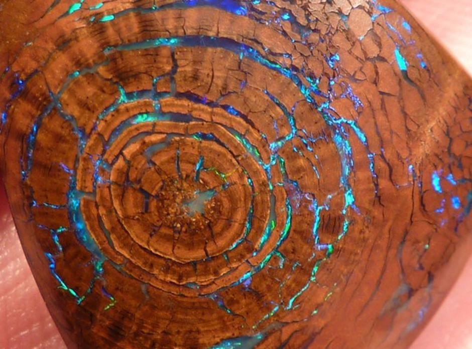 Rare Opalized Wood Metallic Greens