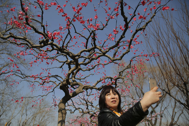 A woman takes a selfie under a decorated tree at the Longtan park as the Chinese Lunar New Year, which welcomes the Year of the Monkey, is celebrated in Beijing, China February 9, 2016. (Photo by Damir Sagolj/Reuters)