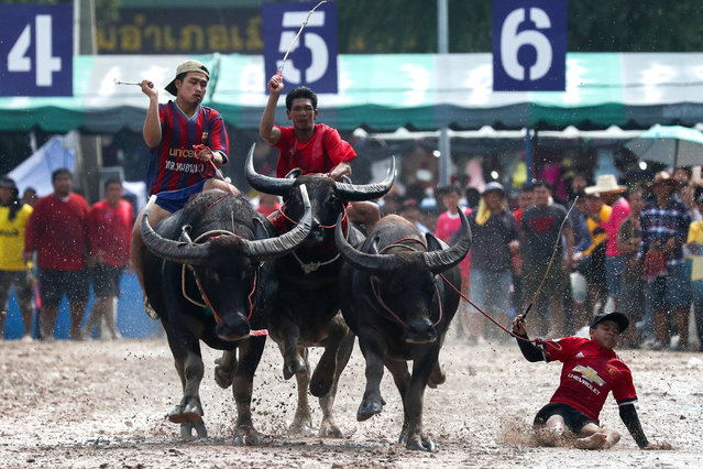 Jockeys compete in Chonburi's annual buffalo race festival in Chonburi province, Thailand October 23, 2018. (Photo by Athit Perawongmetha/Reuters)