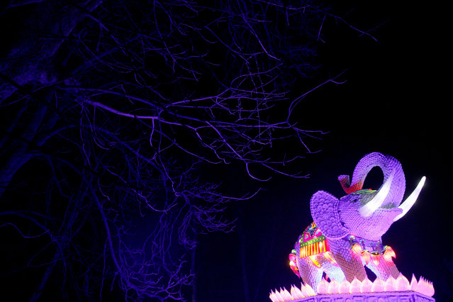 An elephant light display is illuminated during the The Magical Lantern Festival marking the Chinese new year at Chiswick House in London, Britain January 18, 2017. (Photo by Neil Hall/Reuters)