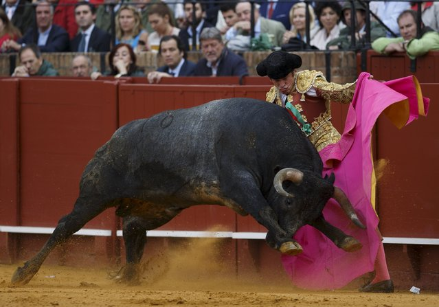 Spanish matador Eduardo Davila Miura performs a pass to a bull during a bullfight at The Maestranza bullring in the Andalusian capital of Seville, southern Spain April 26, 2015. (Photo by Marcelo del Pozo/Reuters)