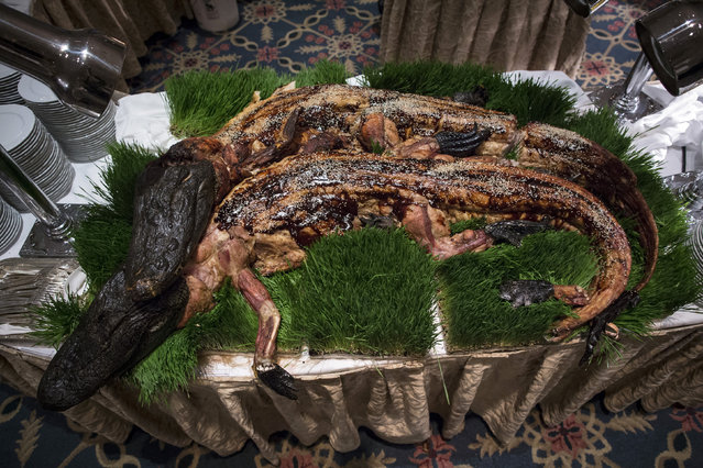 Whole cooked alligators are displayed before being served at the 110th Explorers Club Annual Dinner at the Waldorf Astoria in New York March 15, 2014. The club, which promotes the scientific exploration of land, sea, air and space featured catering by chef and exotic creator Gene Rurka. Chef Rurka prepared a variety of dishes featuring an array of insects, wildlife, animal body parts and invasive species. (Photo by Andrew Kelly/Reuters)