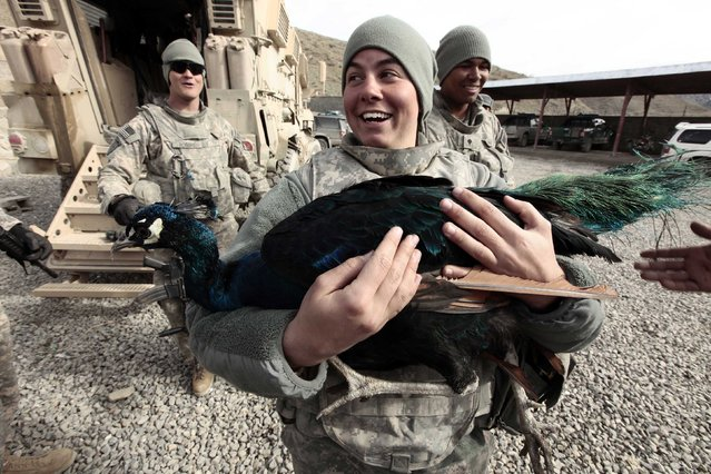 U.S Army PFC Jessica Harmon from Task Force Denali 92 MP carries a peacock at Wazi-Zadram police station in Paktya province, Afghanistan December 11, 2009. (Photo by Zohra Bensemra/Reuters)