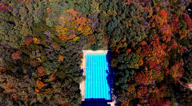A swimming pool can be seen among forest in Shenyang, northeast China's Liaoning Province on October 15, 2017. (Photo by Sipa Asia/Rex Features/Shutterstock)