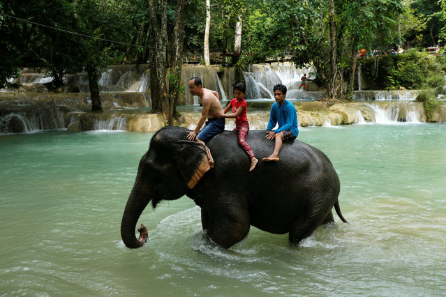 A father with his daughter and a mahout ride an elephant at Tad Sae Waterfall outside Luang Prabang, Laos July 31, 2016. (Photo by Jorge Silva/Reuters)