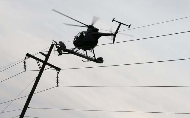A helicopter-assisted power line technician works on a telephone pole while perched on a platform affixed to the hovering helicopter in Rhodesdale, Maryland October 29, 2014. (Photo by Kevin Lamarque/Reuters)