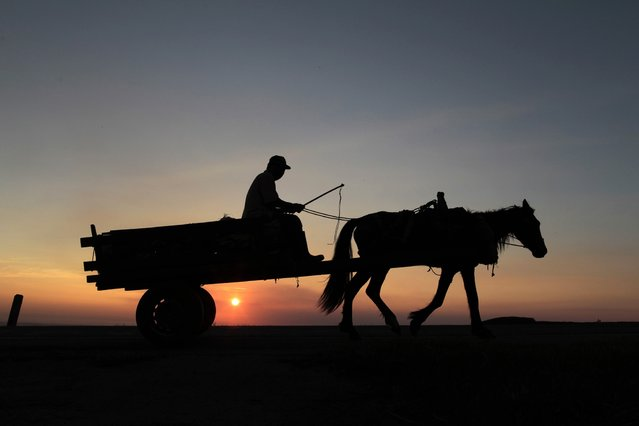 A farmer rides his horse after finishing his day's work as the sun sets in the outskirts of Managua November 11, 2014. (Photo by Oswaldo Rivas/Reuters)