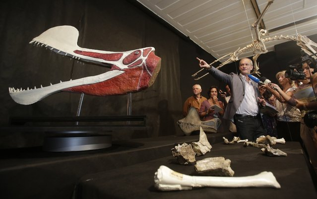 Brazilian paleontologist Alexander Kellner shows the fossils and a model of the newly-discovered prehistoric pterosaur to journalists during its presentation at Rio's Federal University Museum in Rio de Janeiro, March 20, 2013. According to Brazilian scientists, the specimen is referred to as Tropeognathus cf. T. mesembrinus, and it is the largest known pterosaur fossils recovered from Gondwana, the name given to the more southerly of the two supercontinents which were part of the Pangaea supercontinent in the past. (Photo by Ricardo Moraes/Reuters)