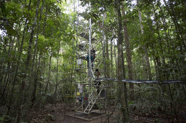 Researchers go up the Amazon Tall Tower Observatory (ATTO) in Sao Sebastiao do Uatuma in the middle of the Amazon forest in Amazonas state January 9, 2015. (Photo by Bruno Kelly/Reuters)