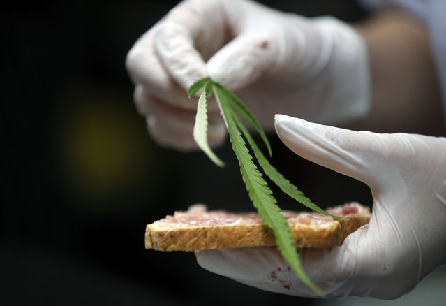 """A chef puts marijuana leaves on top of """"Giggle Bread"""", or fried bread with minced pork spread, at Abhaibhubejhr Day Spa, in Prachin Buri province, Thailand, 12 January 2021. The Abhaibhubejhr Day Spa includes Thailand's first cannabis restaurant, serving healthy Thai food prepared with cannabis ingredients, after the Thai government legalized the use of most parts of marijuana and hemp plants in cosmetics and food. Based on Thai traditional folk wisdom, marijuana has been used as spice and herbal treatment for centuries. Abhaibhubejhr Day Spa is part of the Chao Phraya Abhaibhubejhr Hospital in Prachin Buri, home to the country's first medicinal marijuana clinic. In 2018 Thailand became the first government in South East Asia to legalize cannabis for medical use and research purposes. (Photo by Rungroj Yongrit/EPA/EFE)"""