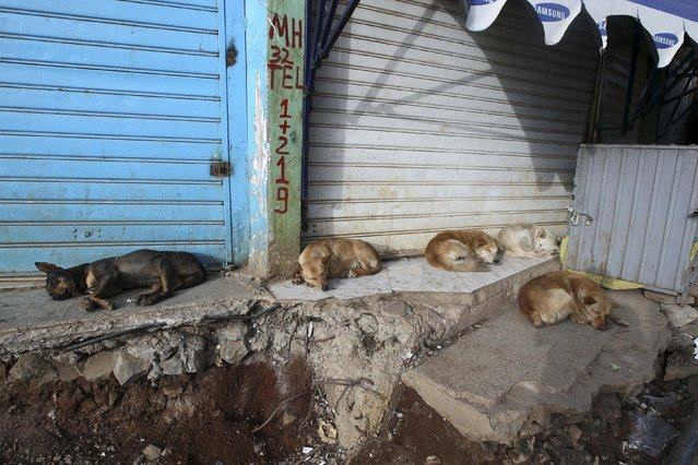 Guard dogs sleep outside a shop at the Mercato market in Addis Ababa June 14, 2015. (Photo by Tiksa Negeri/Reuters)