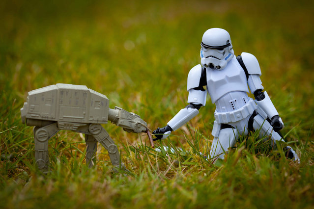 A storm trooper feeds a walker in the grass, taken in Glasgow, Scotland, December 2016. (Photo by David Gilliver/Barcroft Images)