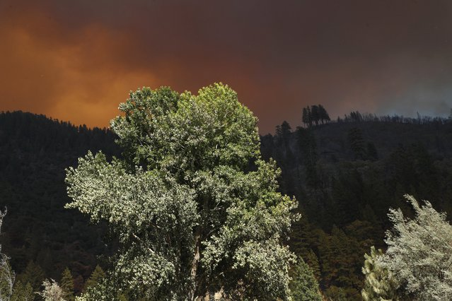 A tree in sunlight as heavy plumes of smoke billowing from the Dixie fire above the Plumas National Forest in Plumas and Butte Counties in California, USA, 21 July 2021. The fire has grown to 85,479 acres with 15 percent containment. (Photo by John G. Mabanglo/EPA/EFE)