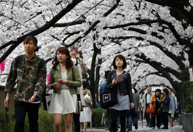 People walk under blooming cherry blossoms in Tokyo, Wednesday, April 1, 2015. (Photo by Shizuo Kambayashi/AP Photo)