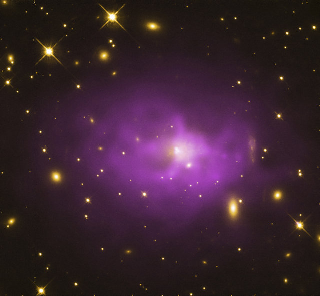 The galaxy cluster PKS 0745-19 is shown in this NASA composite image containing X-rays from Chandra (purple) and optical date from the Hubble Telescope (yellow) released December 19, 2012. The black hole at the center of this galaxy is part of a survey of 18 of the biggest known black holes in the universe.  Researchers found that the black holes in the survey may be about ten times more massive than previously thought. (Photo by Reuters/NASA/CXC/Stanford)