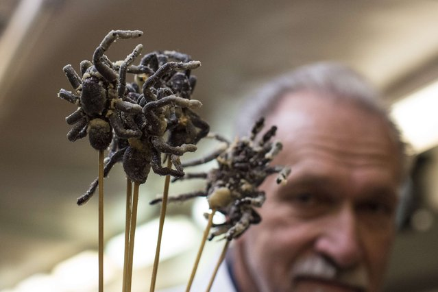 Gene Rurka holds cooked tarantulas in the kitchen before the 110th Explorers Club Annual Dinner at the Waldorf Astoria in New York March 15, 2014. (Photo by Andrew Kelly/Reuters)