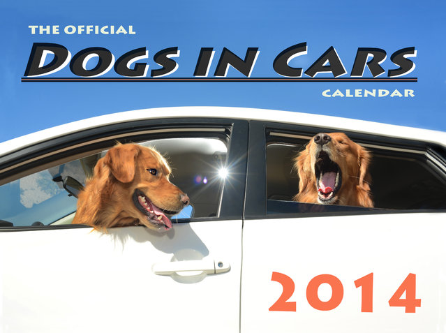 "The front over of the Dogs In Cars 2014 calendar in Los Angeles, California. A wacky photographer has come up with an unusual pet project – snapping ecstatic dogs as they hang their heads out of car windows. Lara Jo Regan, 48, embarked on the odd task for her new 2014 calendar ""Dogs In Cars"". The unusual shoot, which took place in Los Angeles, California, aimed to explore the joy experienced by pugs and huskies when a breeze hits their faces. (Photo by Lara Jo Regan/Barcroft Media)"