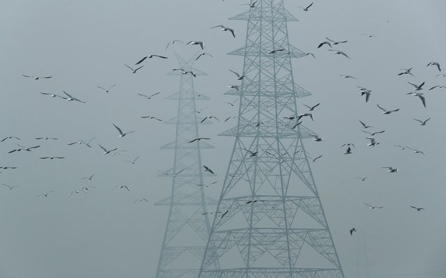 Birds fly next to electricity pylons on a smoggy afternoon in the old quarters of Delhi, India, October 30, 2019. (Photo by Adnan Abidi/Reuters)