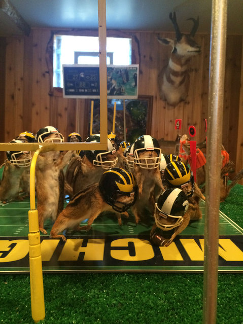 This photo taken Monday, October 26, 2015, shows stuffed chipmunks portraying players on the final play of the Michigan State-Michigan NCAA college football game at the home of taxidermist Nick Saade in Lansing, Mich. (Photo by Judy Putnam/Lansing State Journal via AP Photo)