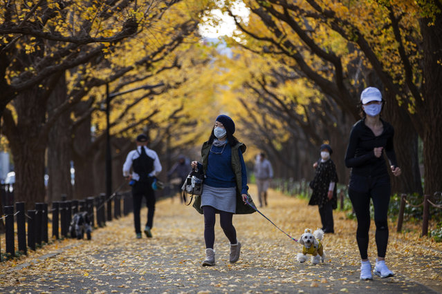 People wearing protective masks to help curb the spread of the coronavirus walk through the row of ginkgo trees along the sidewalk as the trees and sidewalk are covered with the bright yellow leaves Friday, November 27, 2020, in Tokyo. (Photo by Kiichiro Sato/AP Photo)