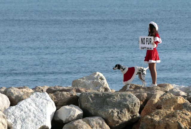 An anti-fur activist from the Coalition to Abolish the Fur Trade (CAFT) who is dressed in a Santa costume, stands next to a Dalmatian as she participates in a demonstration on a beach in Nice December 20, 2014. (Photo by Eric Gaillard/Reuters)